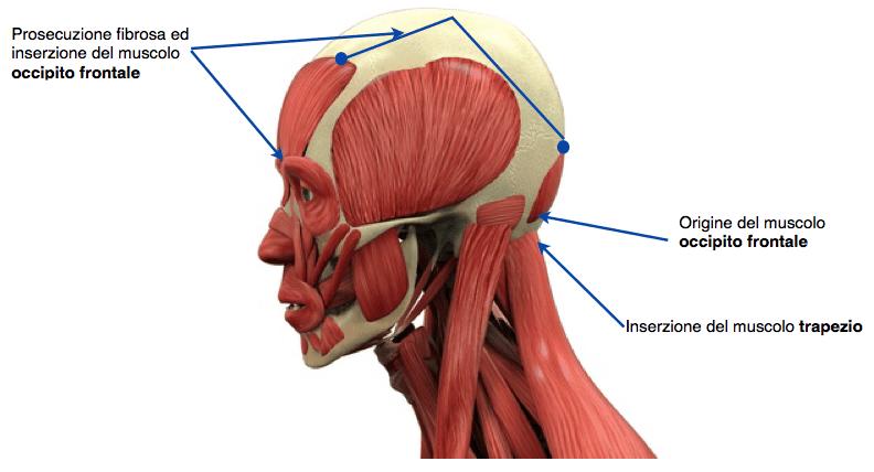 Compressione frattura spinale di trattamento di reparto di petto