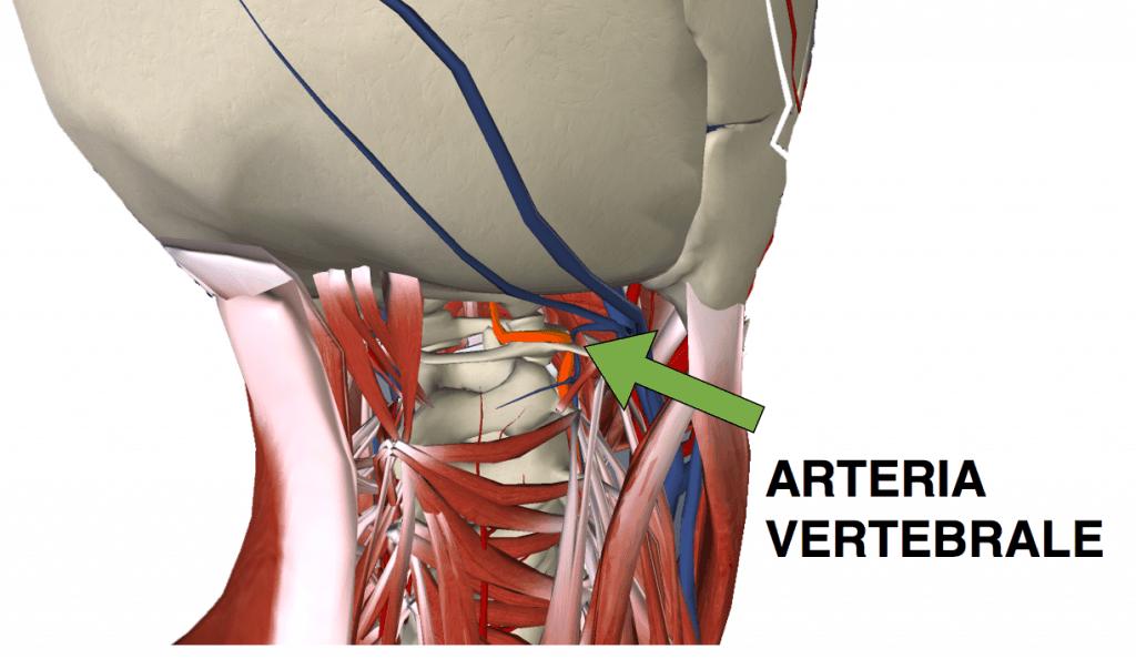 arteria vertebrale