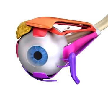 Muscoli oculari, sbandamenti e cervicale