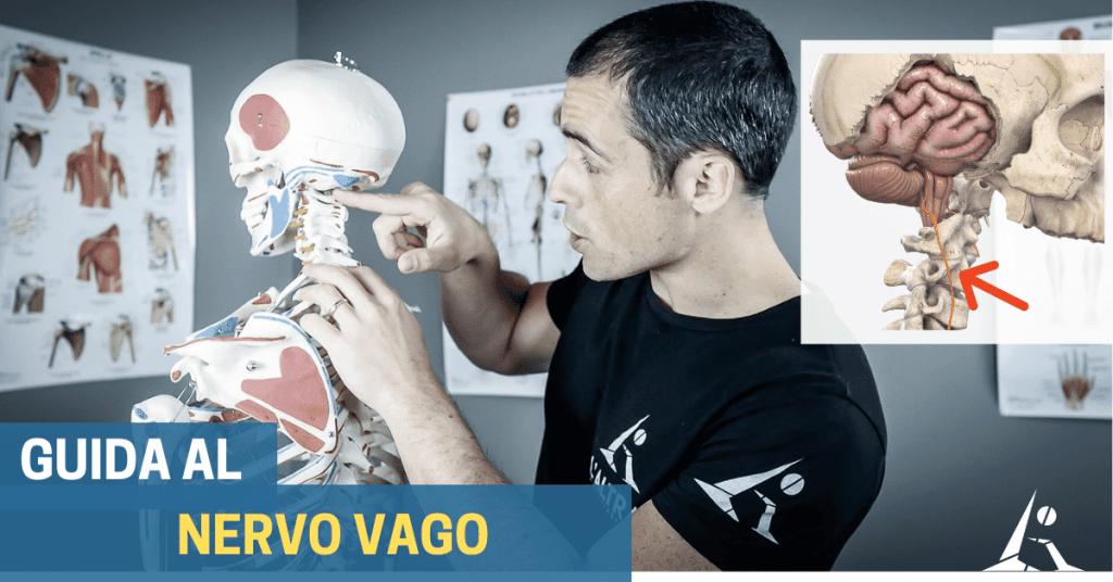 Nervo vago: la chiave per migliorare molti sintomi e disturbi?