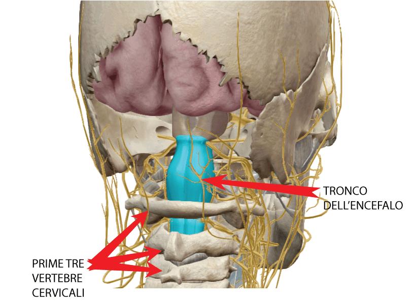 Sintomi, rimedi ed esercizi contro il dolore alla cervicale