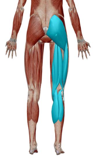Infiammazione Nervo Sciatico Rimedi Ed Esercizi L 39 Altra