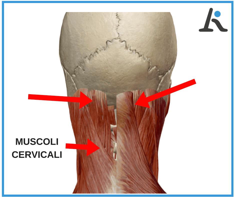 Dolore alla nuca e muscoli cervicali