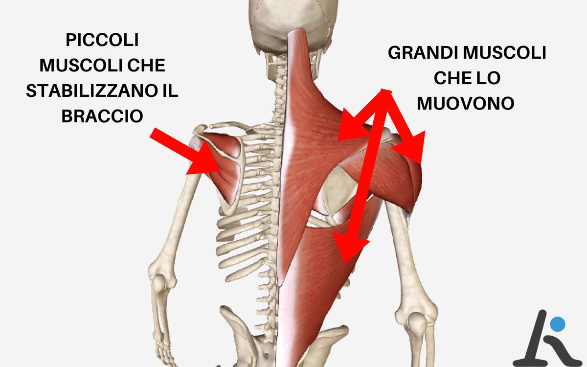 """... i muscoli """"piccoli"""" (quelli chiamati """"cuffia dei rotatori"""") che servono  a stabilizzare la testa dell omero e a tenerla al suo posto durante i  movimenti 3ba98a28771d"""