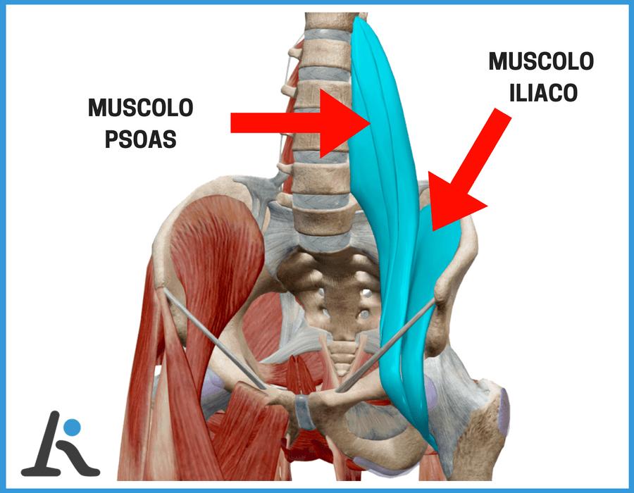 Muscolo iliaco esercizi