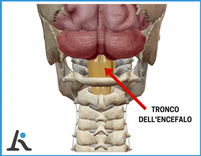 Tronco dell'encefalo e acufeni da cervicale