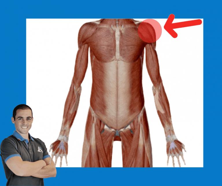 Spalla dolorante - muscolo spalla