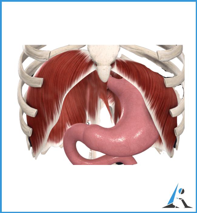 prostatite mancanza di respiro lombalgia oppressione allo stomaco