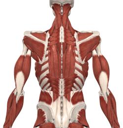 disturbi-muscolo-scheletrici